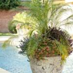 """Chris Olsen of Botanic Gardens filled containers with Phoenix roebelenii palms, Milion Bells petunias and wandering jew plants for foliage. The pool, designed by Brooks Pool Co., features tile edging and bench seating."""